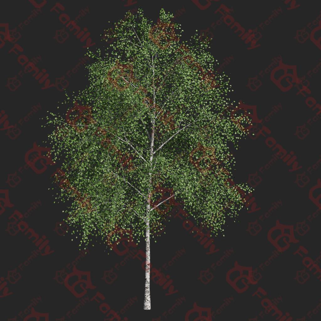 植物_树_写实树木