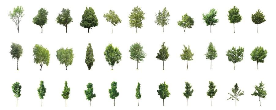 高质量透贴树木素材  Forest/Digital vol. 1、2、5