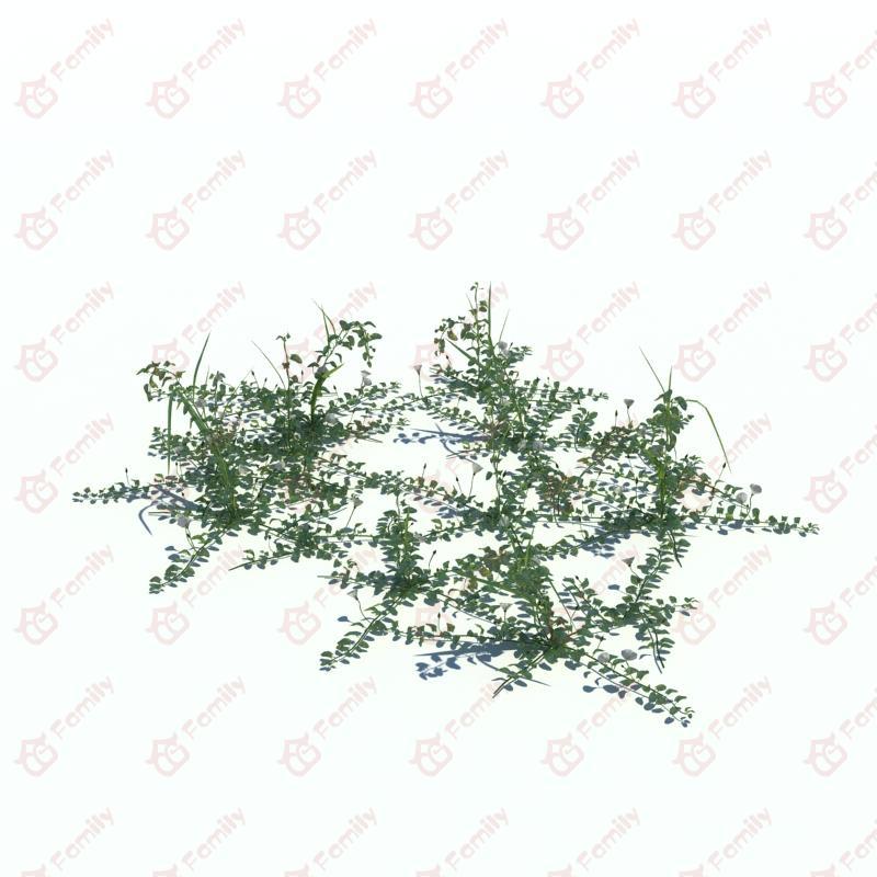 植物_野花_野草_CG模型下载