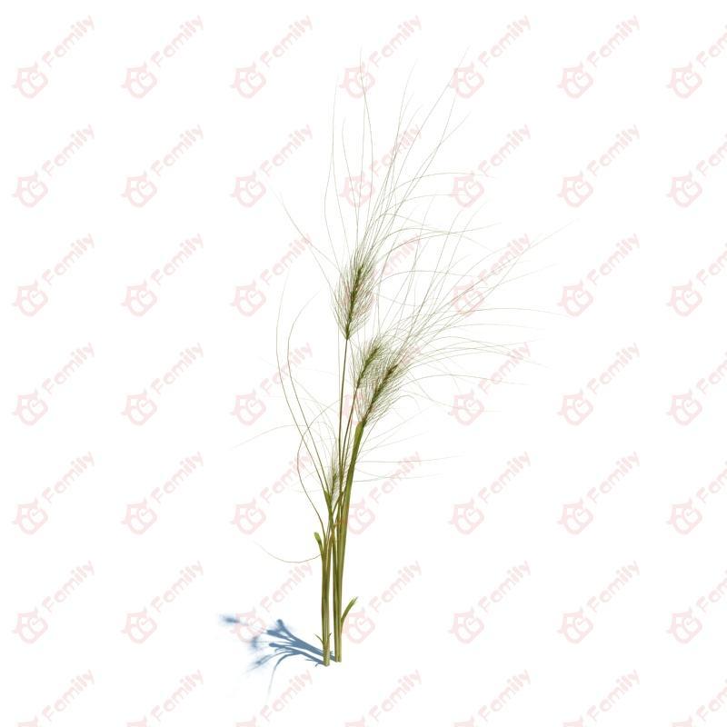 植物_麦子_草地_cg模型下载