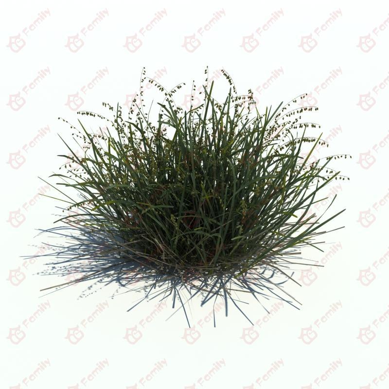 野外杂草野生植物3d模型下载