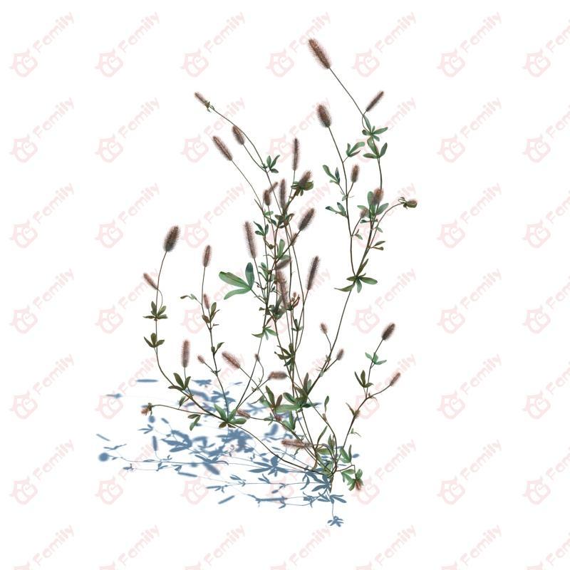 3d野生植物杂草模型下载