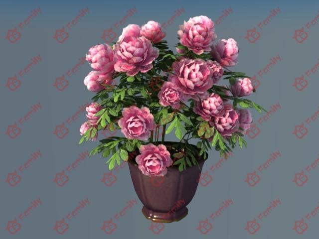 牡丹花 花瓶 花盆 3d模型网