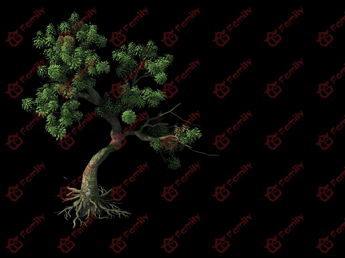 3D高精度树景观植物模型