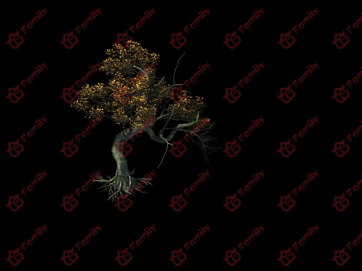 黄冠枫树红枫树,古树,枫叶树,黄色大树模型材质