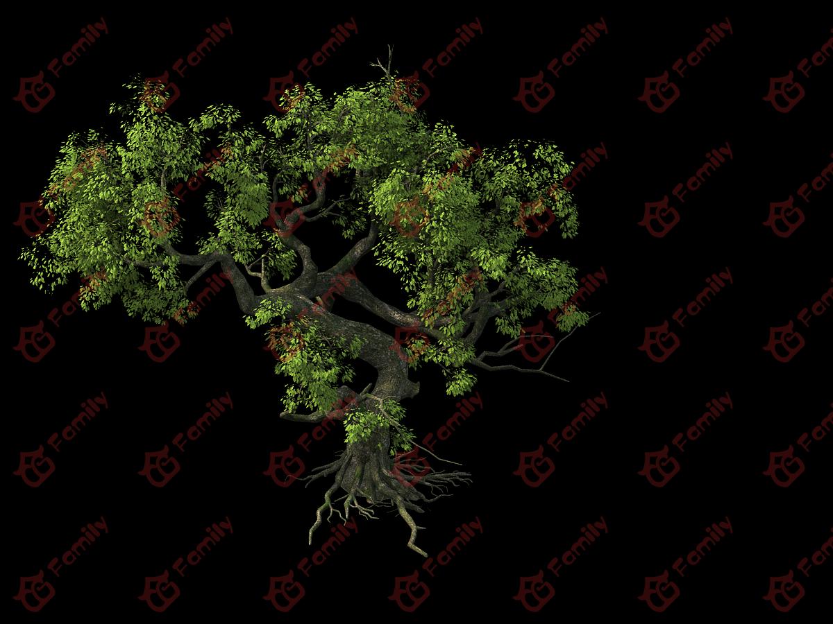 高精度树景观植物古树老树古榕树写实树大树古树风景树巨树模型