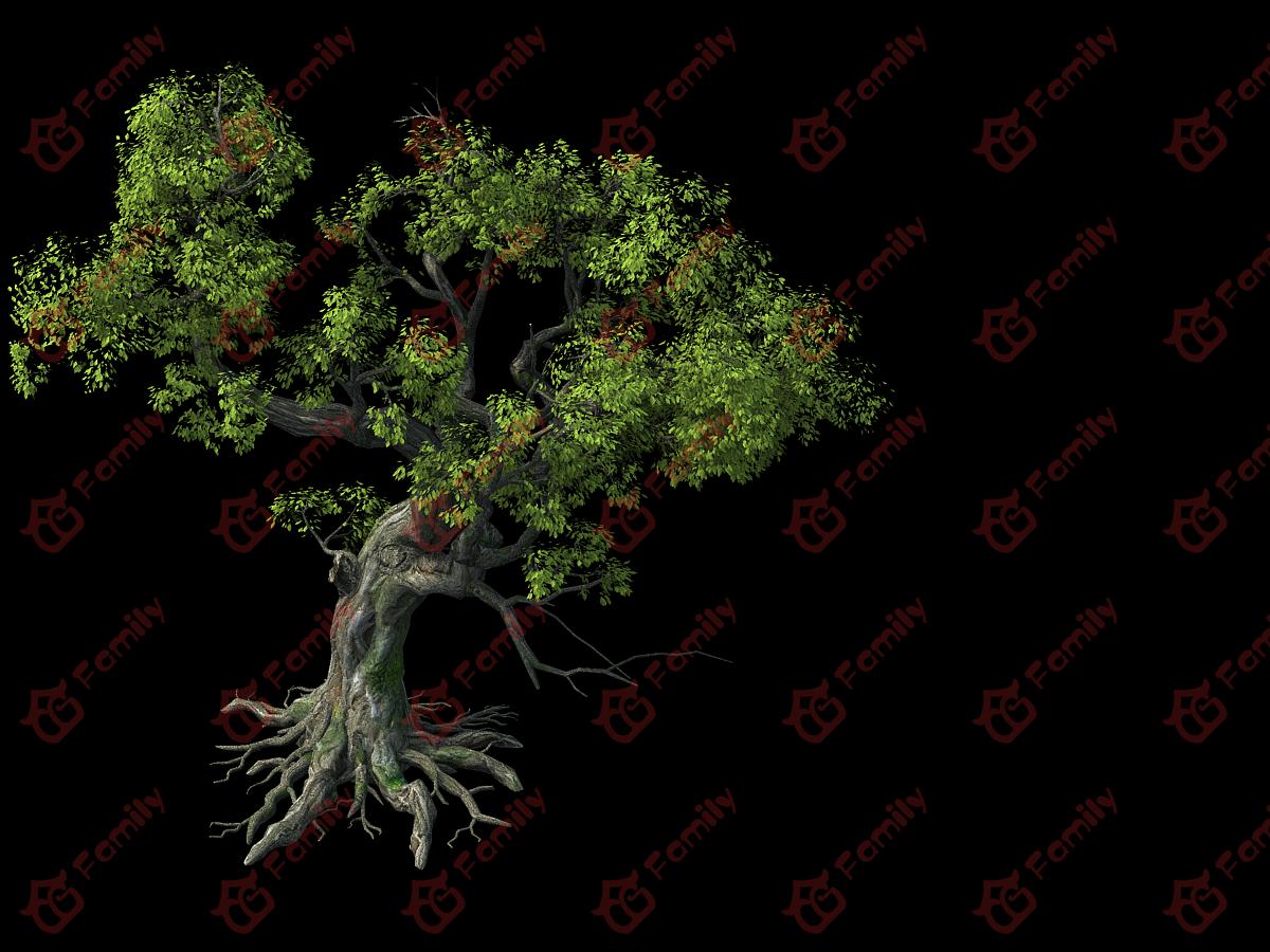 写实古建古树老树古榕树写实树大榕树大树枯藤古树风景树巨树2