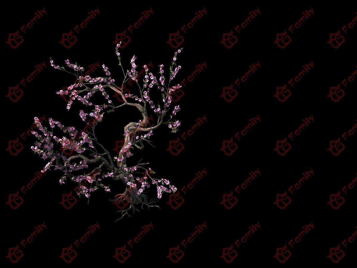 古代写实桃树红树桃花 桃花树 樱花 桃花树 桃树 樱花 樱花树 梅花模型材质