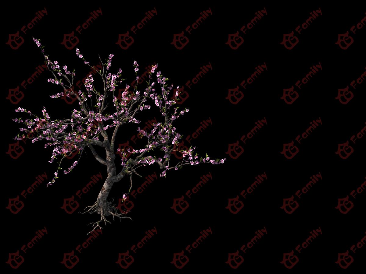 古代写实桃树红树桃花 桃花树 樱花 桃花树 桃树 樱花 樱花树 梅花素材模型材质4