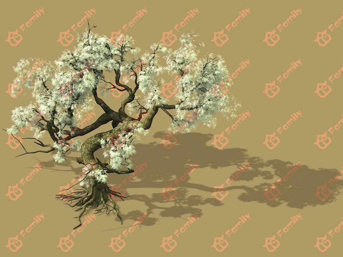 梨花 梨树 梨花树 白花树 梅花 樱花树 樱花 梨花树材质模型1