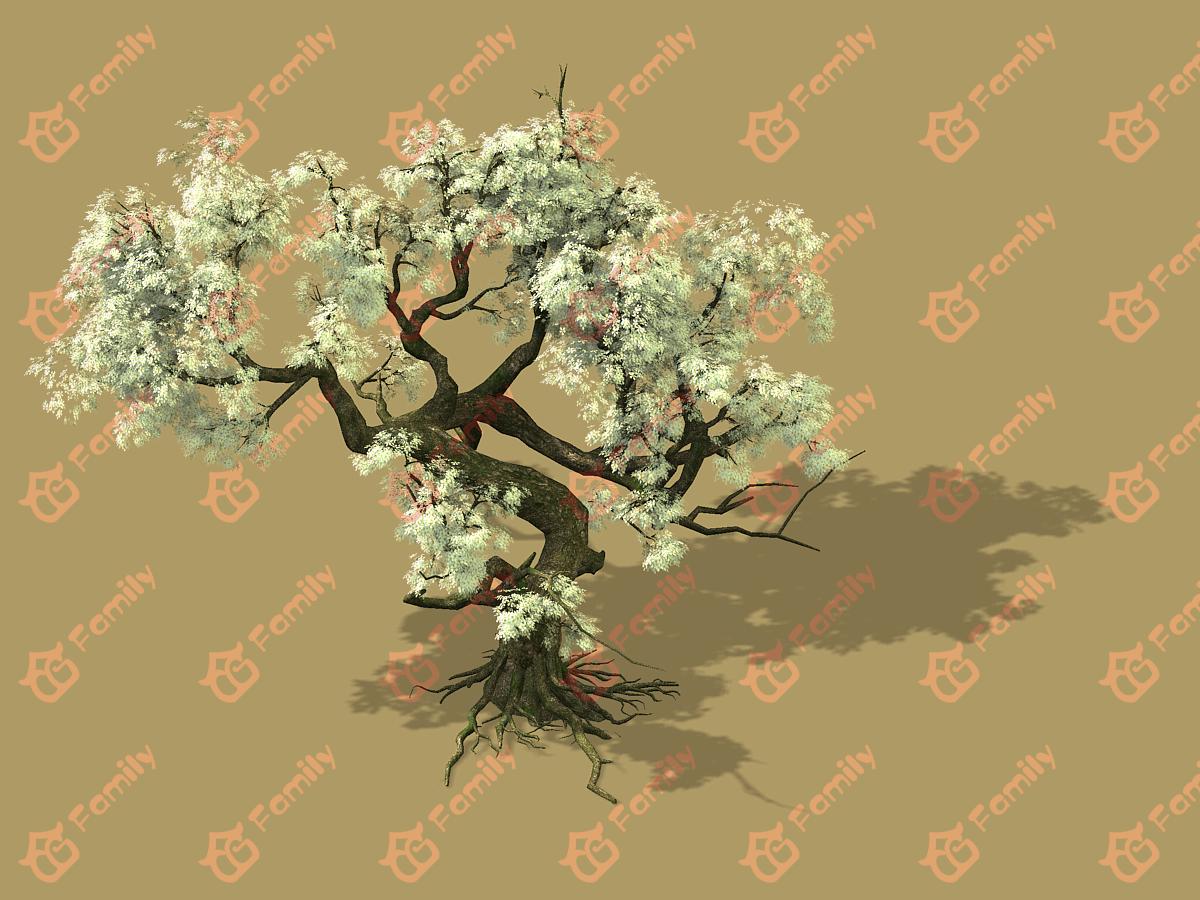 梨花 梨树 梨花树 白花树 梅花 樱花树 樱花 梨花树材质模型2