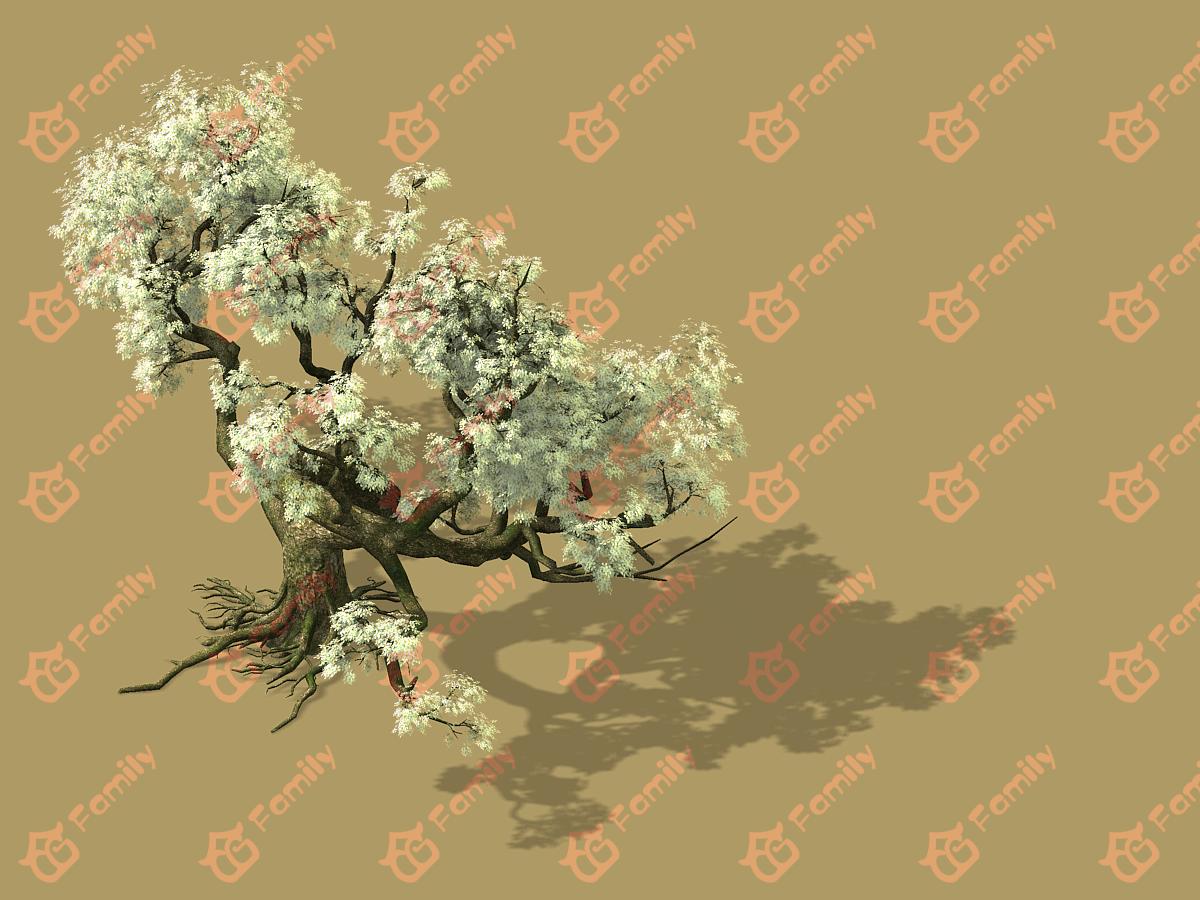 梨花 梨树 梨花树 白花树 梅花 樱花树 樱花 梨花树材质模型3