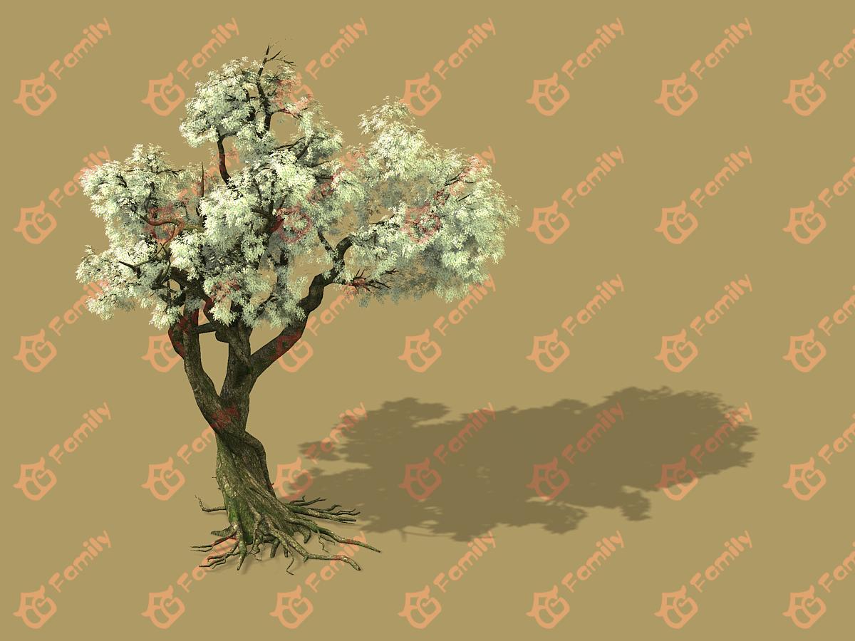梨花 梨树 梨花树 白花树 梅花 樱花树 樱花 梨花树材质模型4