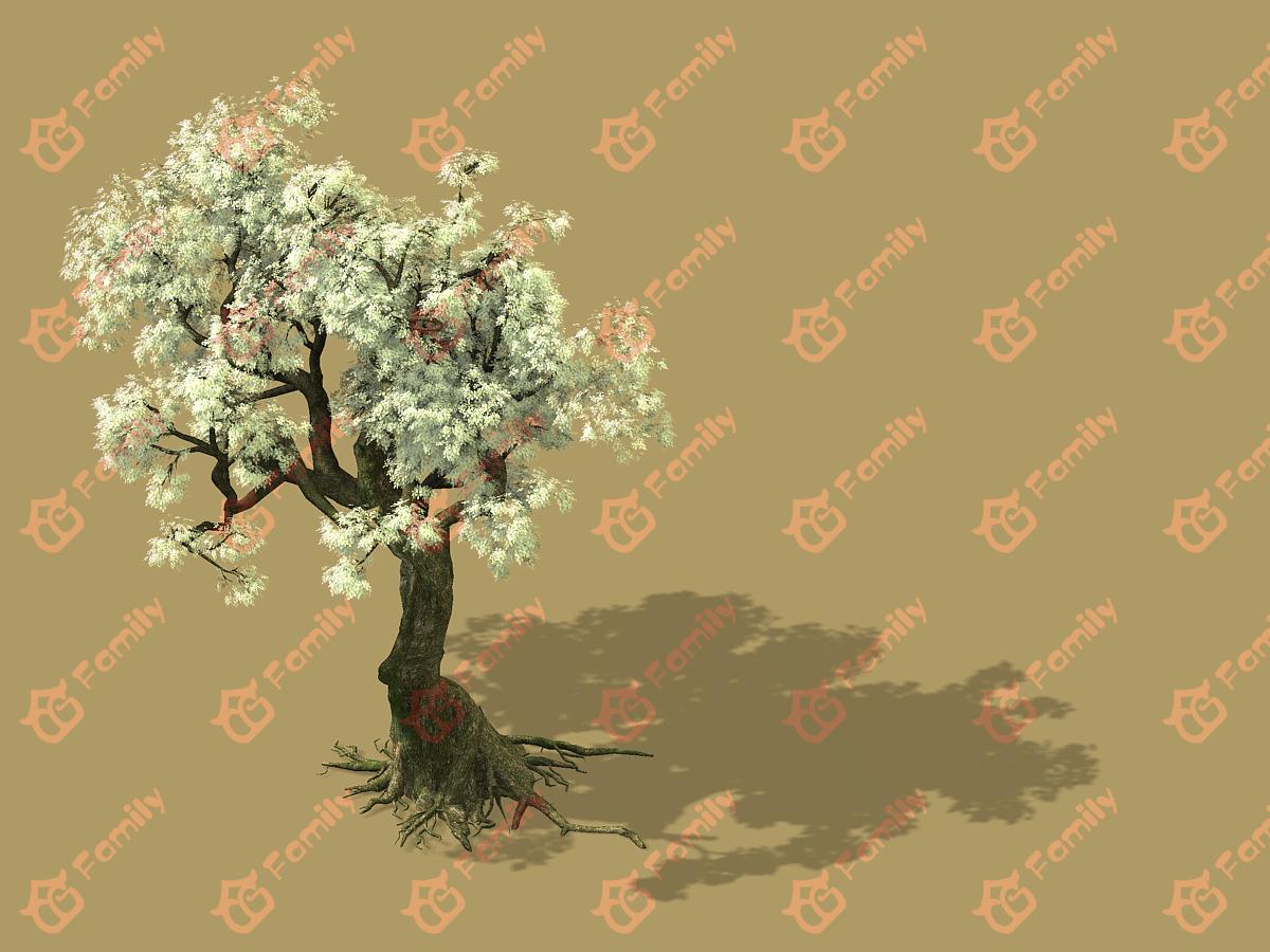 梨花 梨树 梨花树 白花树 梅花 樱花树 樱花 梨花树材质模型5