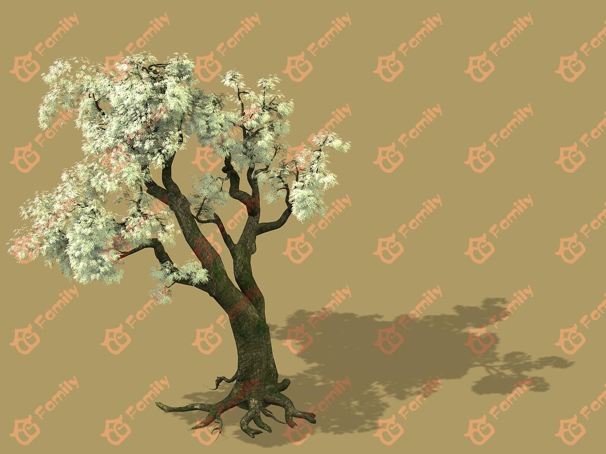 梨花 梨树 梨花树 白花树 梅花 樱花树 樱花 梨花树材质模型
