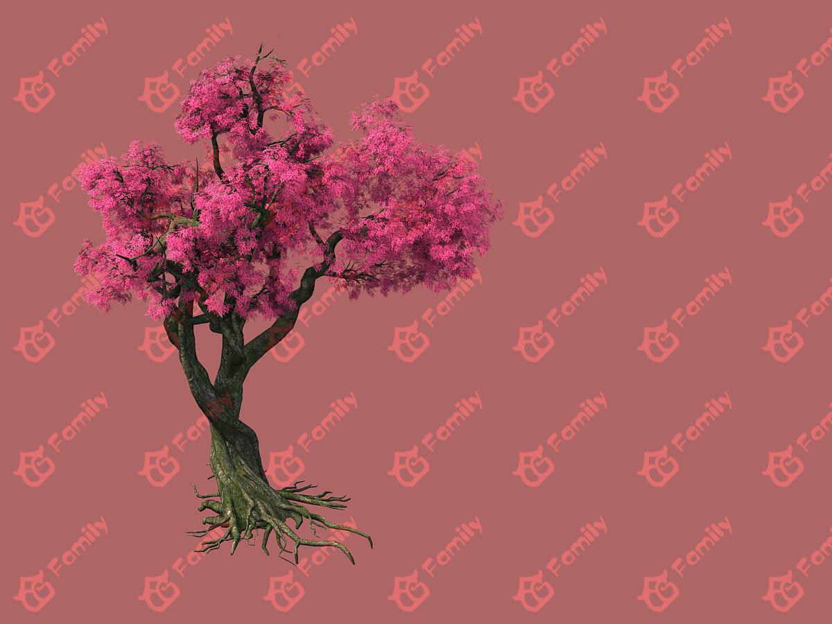 樱花林 樱花瓣 樱花 花树 花瓣开花 花树 樱花树 桃花树 古树 3d模型下载