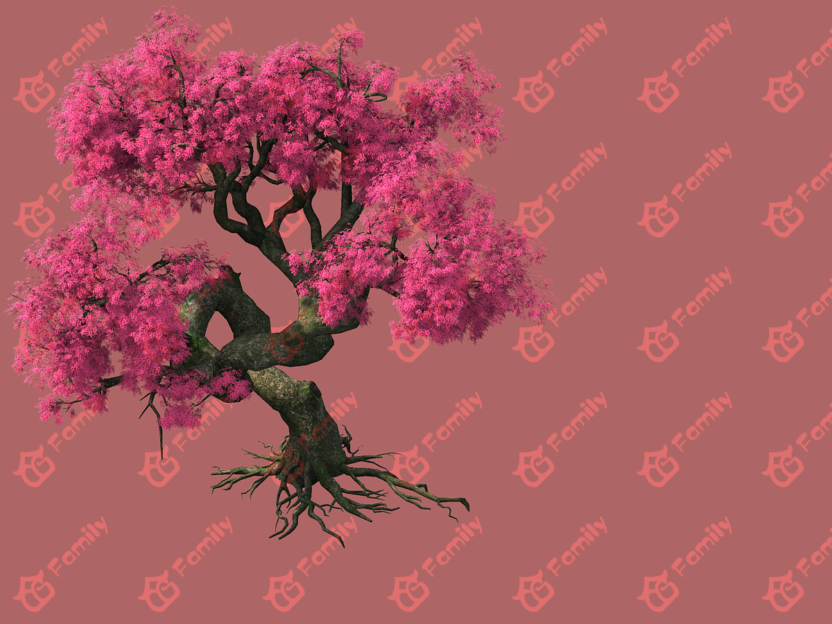粉红色的樱花古树3d模型下载