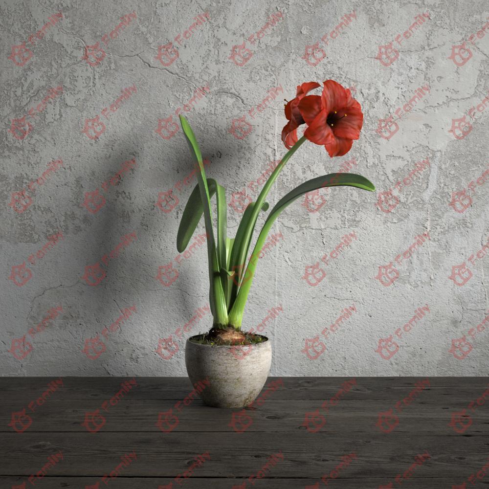 红花莲朱顶红红色花高精度花卉盆栽室内植物装饰3D模型材质06