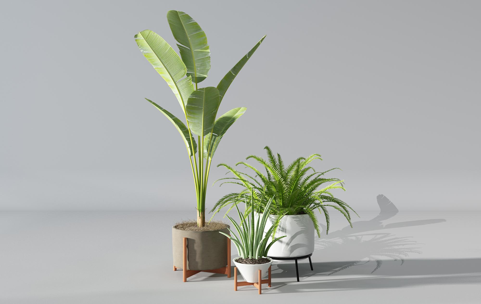 CG模型_ 植物盆景盆栽绿植花盆_3D模型免费下载