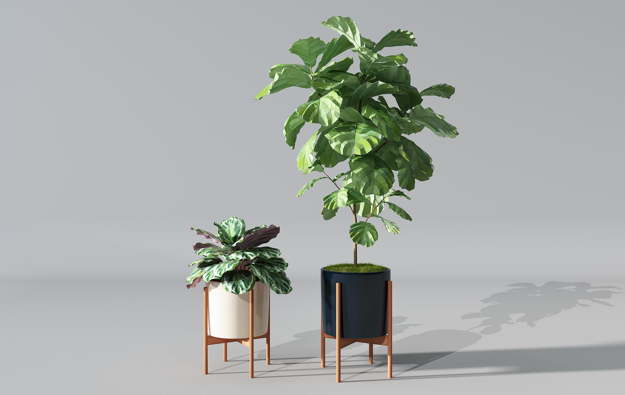 CG模型_ 植物盆景绿植_3D模型免费下载